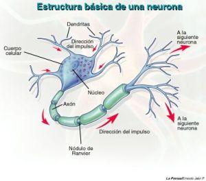 Neurona 3