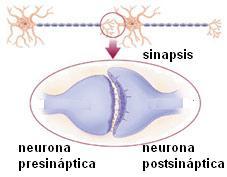 Sinapsis 4